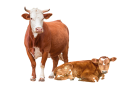 Livestock Farming and Meat Production