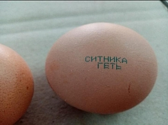 "Bakhmatyuk handed over inscribed eggs ""Sytnyk is corrupt"" to the director of NABU"